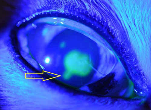 ヘルペス 角膜 炎