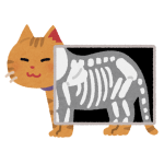 pet_xray_cat.png